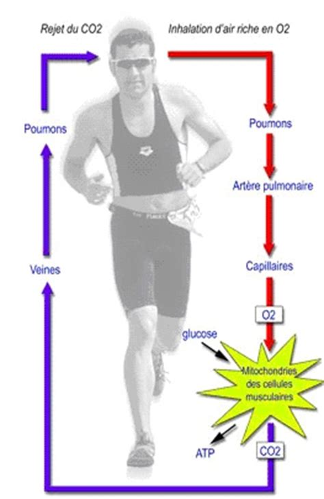 VO2MAX - Page 2