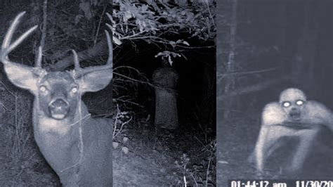 4 True SCARY Camping Stories That Are CREEPY AS HELL
