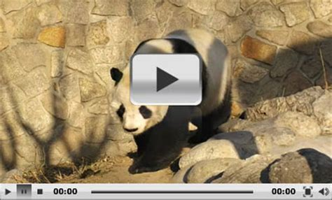 Beijing Zoo, Panda House, Prices and Address